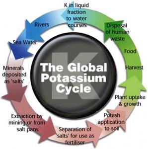 The Global Potash (K) Cycle