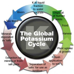 The Global Potash (K) Cycle