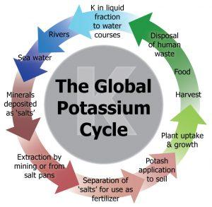 The Global Potassium Cycle