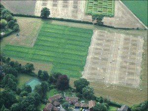 An aerial view of the recent sugar beet trial plots at Rothamsted
