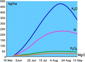 Fig 3: Nutrient uptake of a typical 55 t/ha Potato Crop