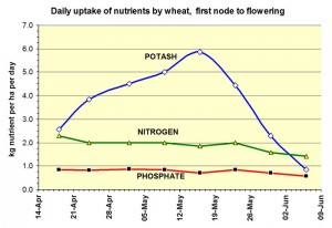 Figure 2: Rate of daily uptake of nitrogen, phosphate and potash by wheat.