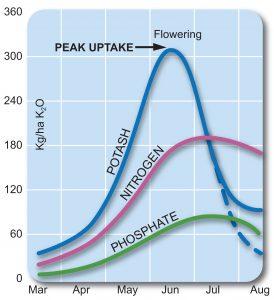 Typical potash uptake for an 8t/ha wheat crop