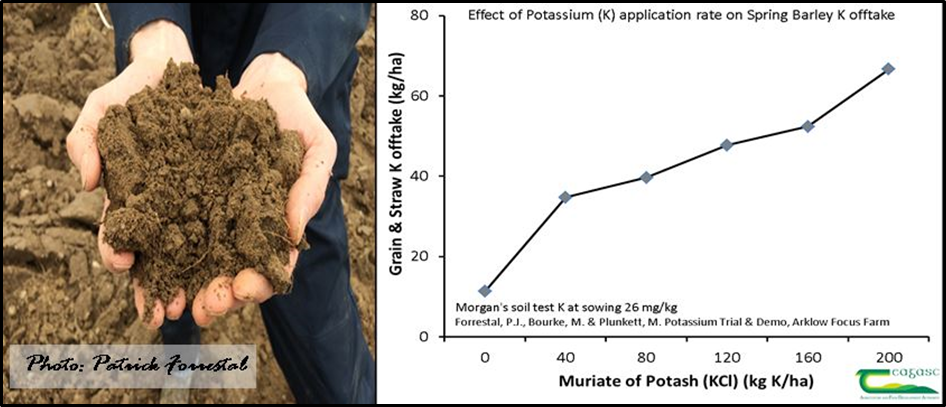 Figure 3. Soil and fertiliser capacity to supply K to spring barley crop at low soil test K
