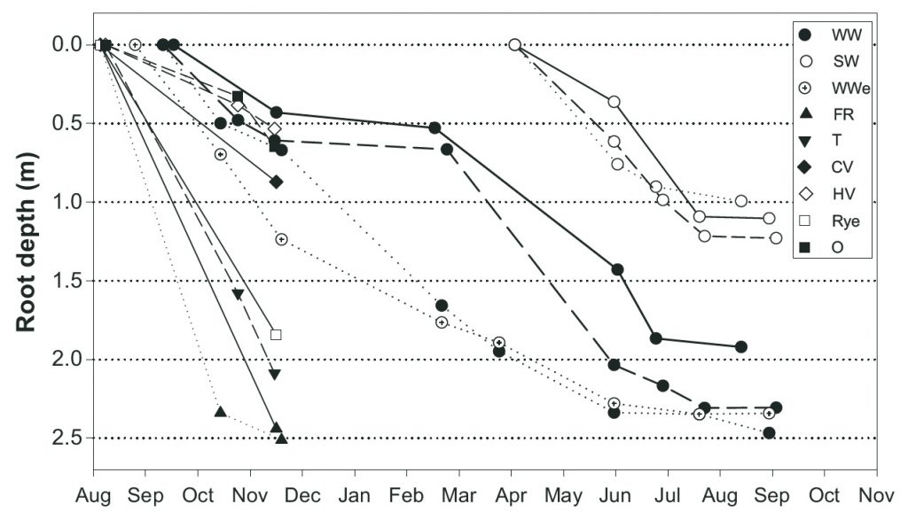 Figure 2. Depth penetration over time by winter wheat, spring wheat and catch crop roots.