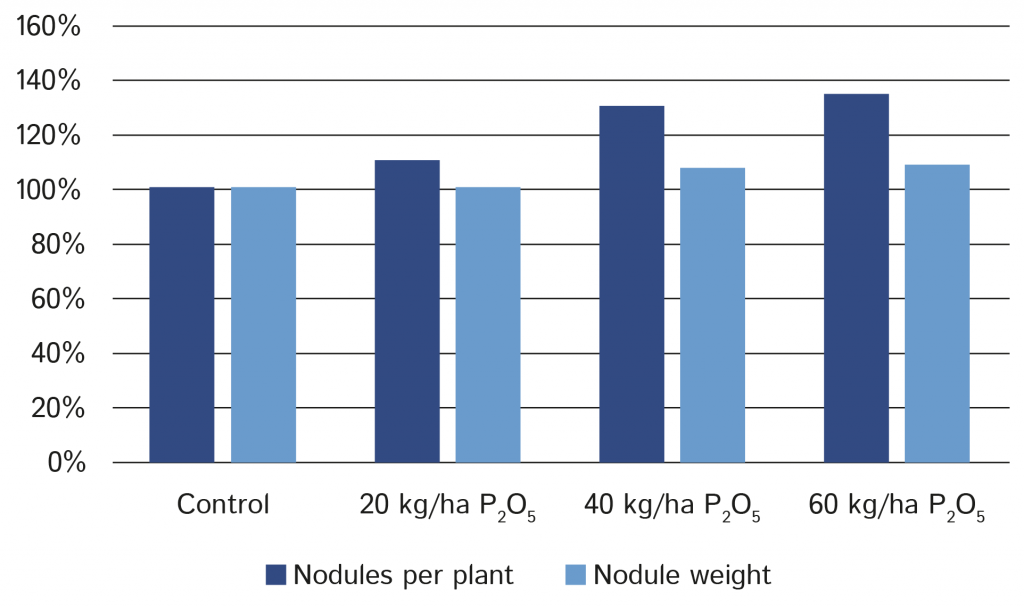 Impact of phosphate application on nodules per plant and nodule weight.